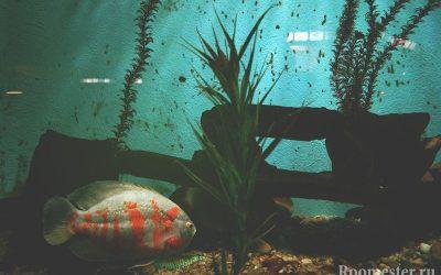 Дизайн аквариума — 20 фото примеров