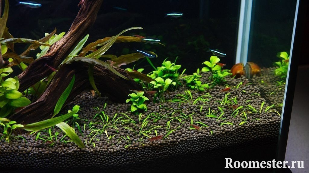 Оформление аквариума грунтом