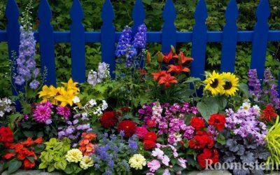 Дизайн клумб на даче: основные правила и идеи создания цветника