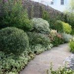 Вечнозеленые растения вдоль забора