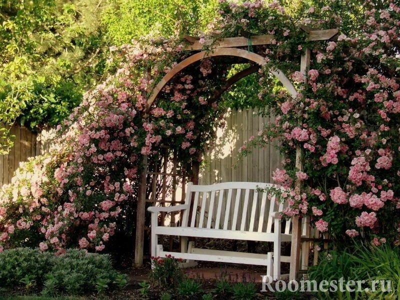 Вьющиеся розы над аркой