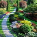 Яркие растения и дорожка