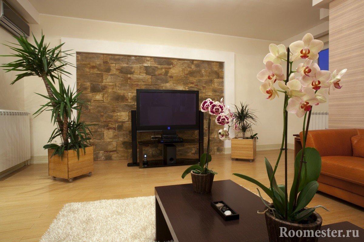 Пальма возле телевизора