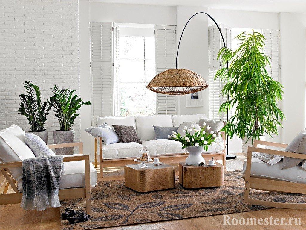 Комнатное деревце в гостиной