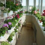 Полки с цветами на балконе