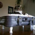 Кот на подушке
