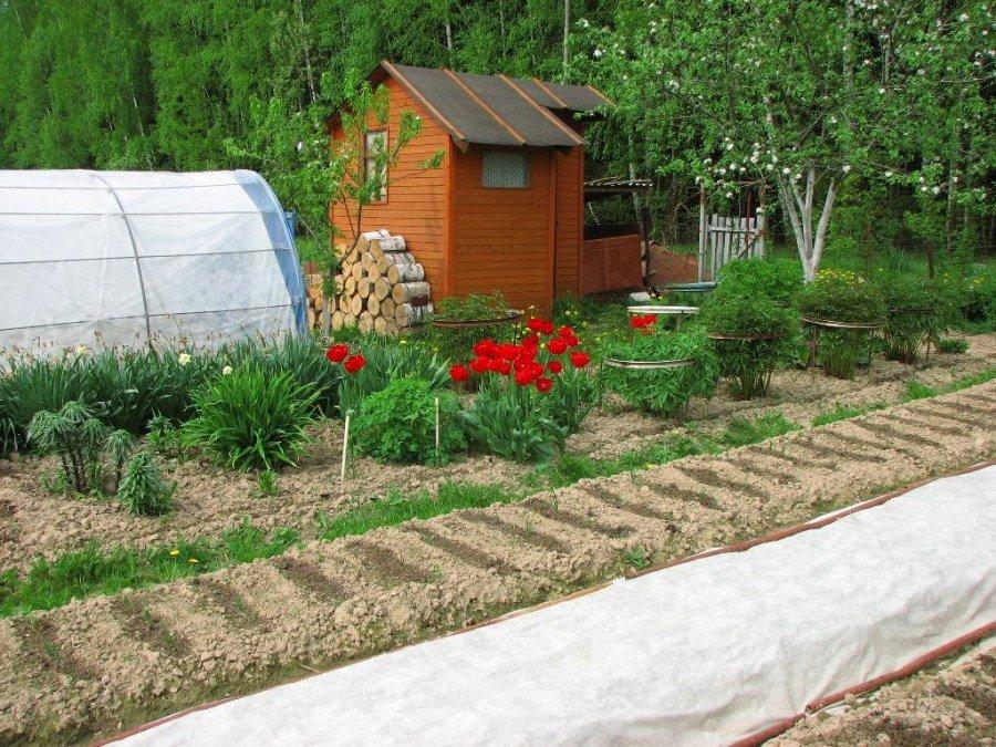 Сад и огород на участке 8 соток
