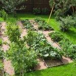 Кустарники на огороде
