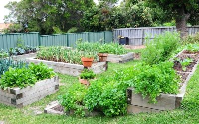 Создаем дизайн огорода своими руками +75 фото примеров