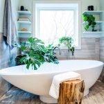 Комнатное растение в ванной комнате