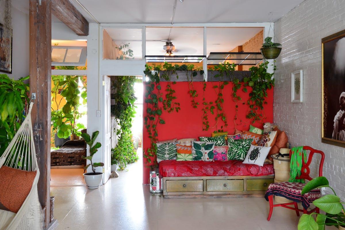 Вьющиеся растения в доме