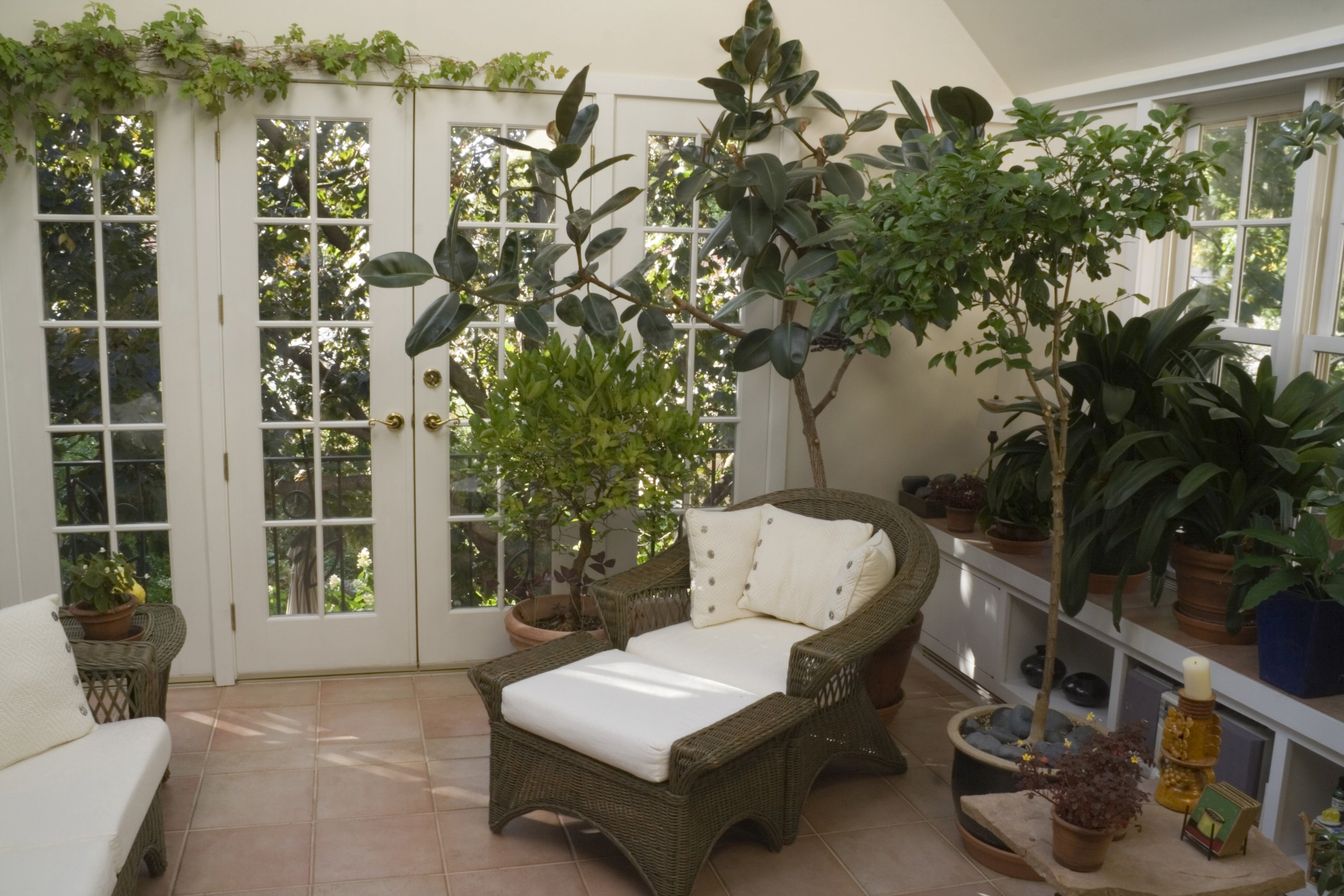 Ботанический сад дома