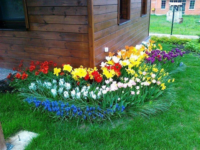 Палисадник с яркими цветами перед домом