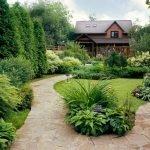 Кустарники у дома