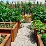Деревянные поддоны для выращивания овощей