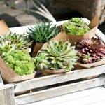 Ящик для кактусов