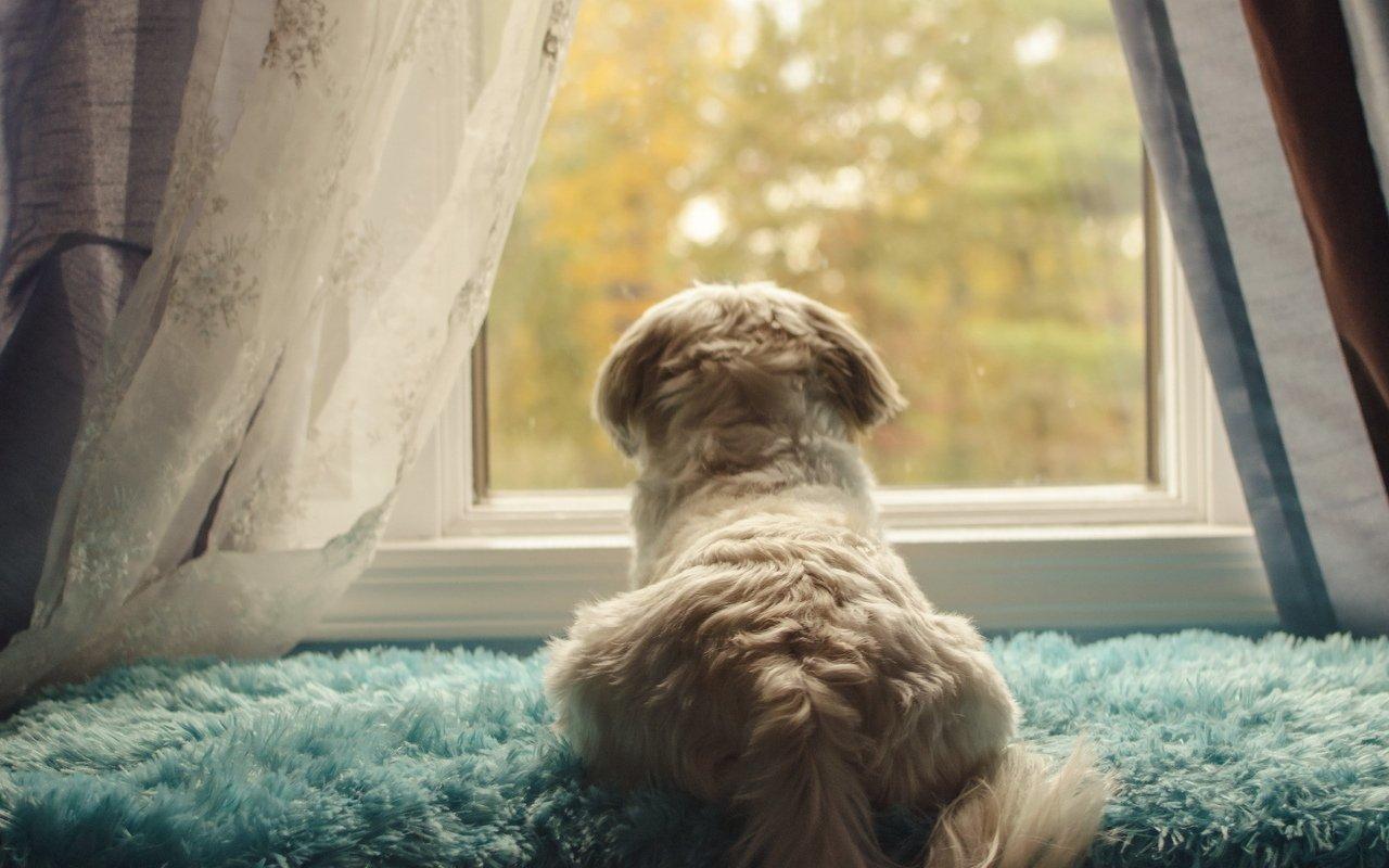 Лежак для собаки на подоконнике
