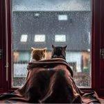 Две кошки на подоконнике