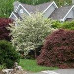 Размещение деревьев на небольшом участке