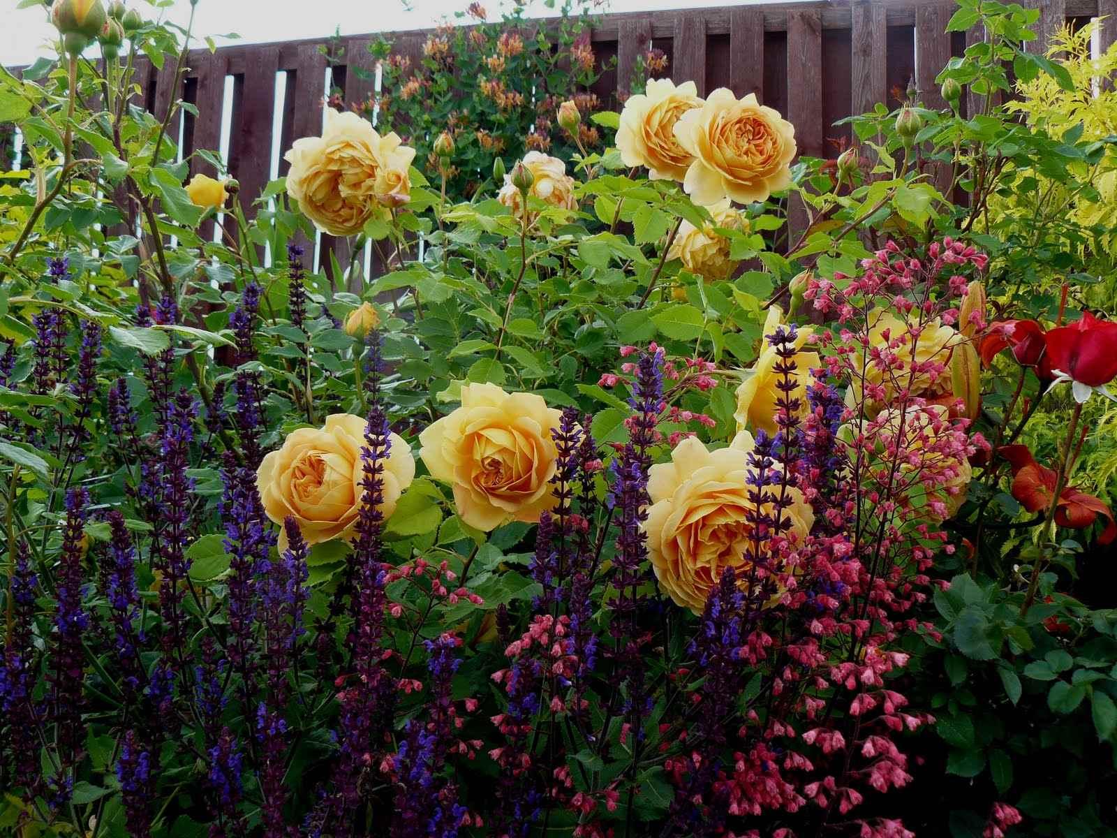 Что посадить с розами в саду фото