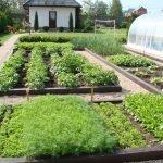 Огород на дачном участке