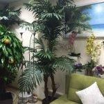 Декоративные пальмы в квартире