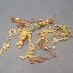 Сухоцветы для заполнения зазоров в кроне