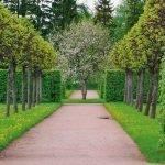 Аллея с декоративными деревьями