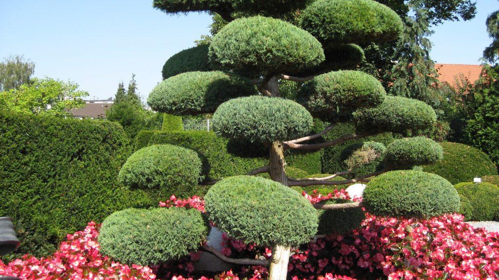 Необычное декоративное дерево