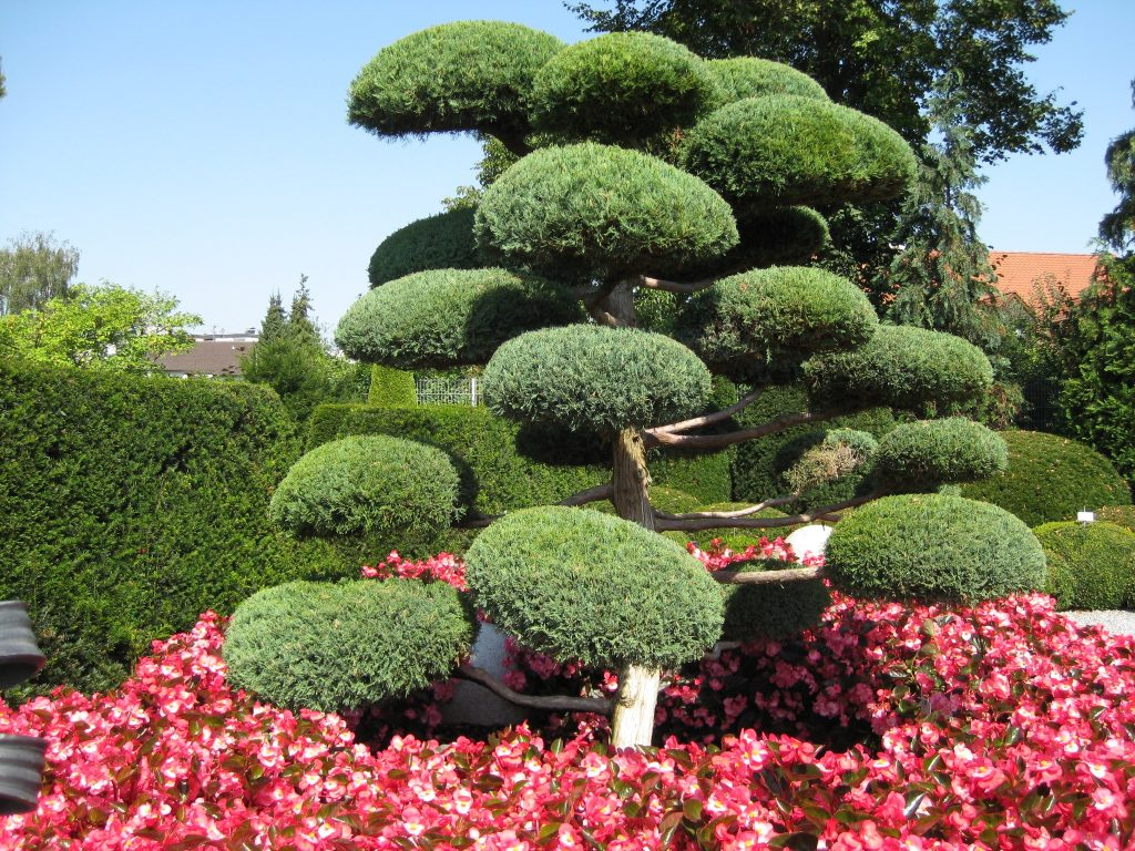 Декоративные деревья для сада: описания и названия