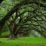 Арка из деревьев