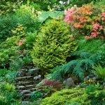 Кустарники и деревья в саду
