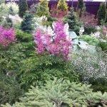 Хвойные и лиственные растения