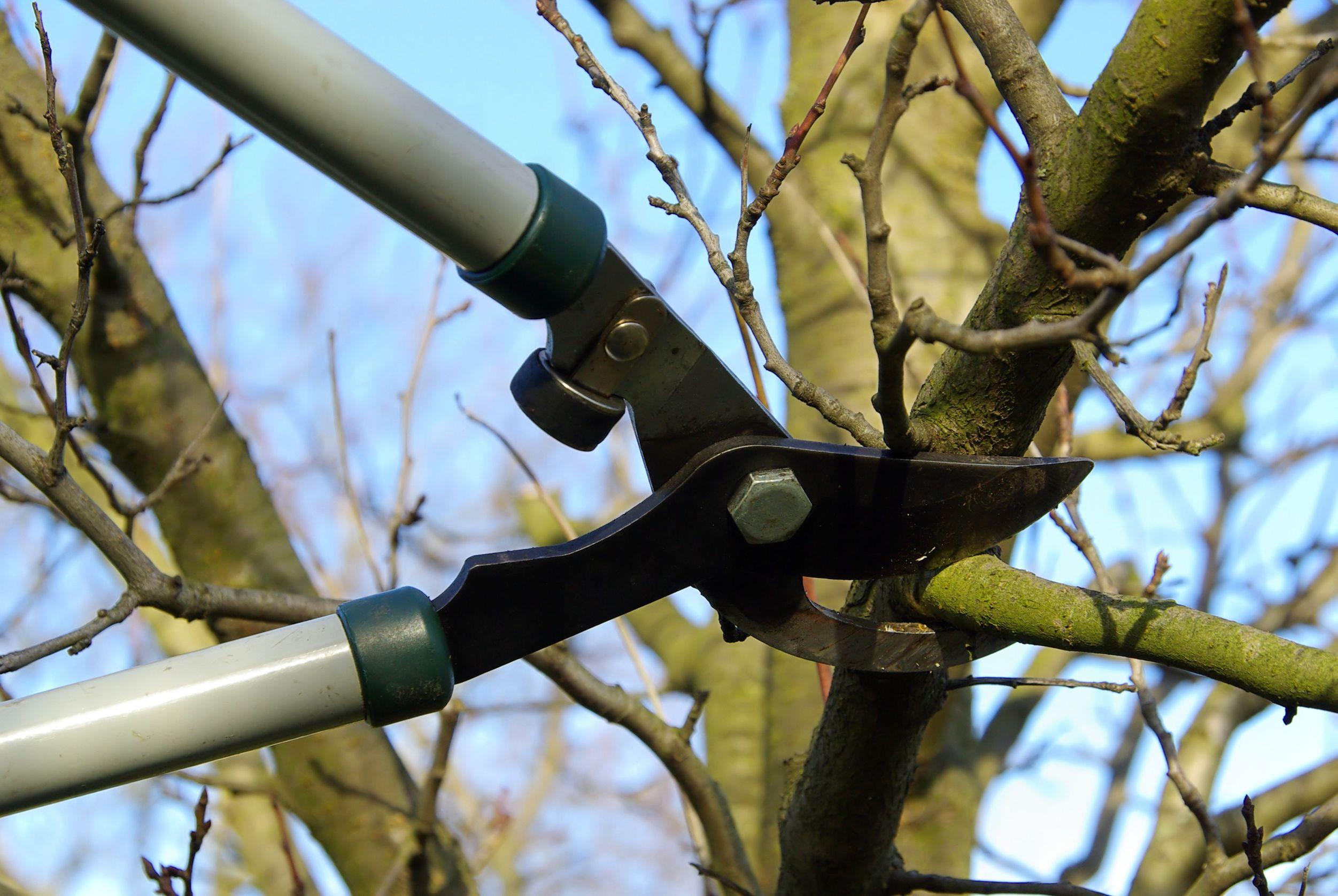 Основные правила ухода за деревьями