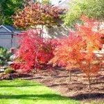 Экзотические деревья с красной листвой