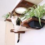 Кошка на полках с цветами