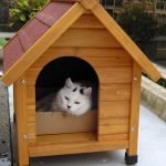 Белый кот в будке