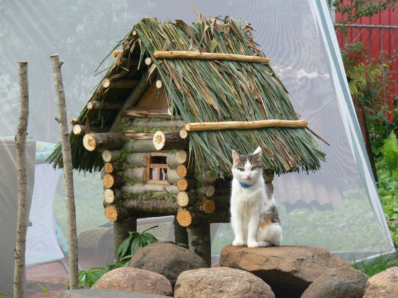 Самодельная будка для кошки