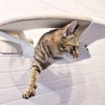 Необычный гамак для кошки