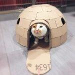 Самодельный домик из картона для кошки