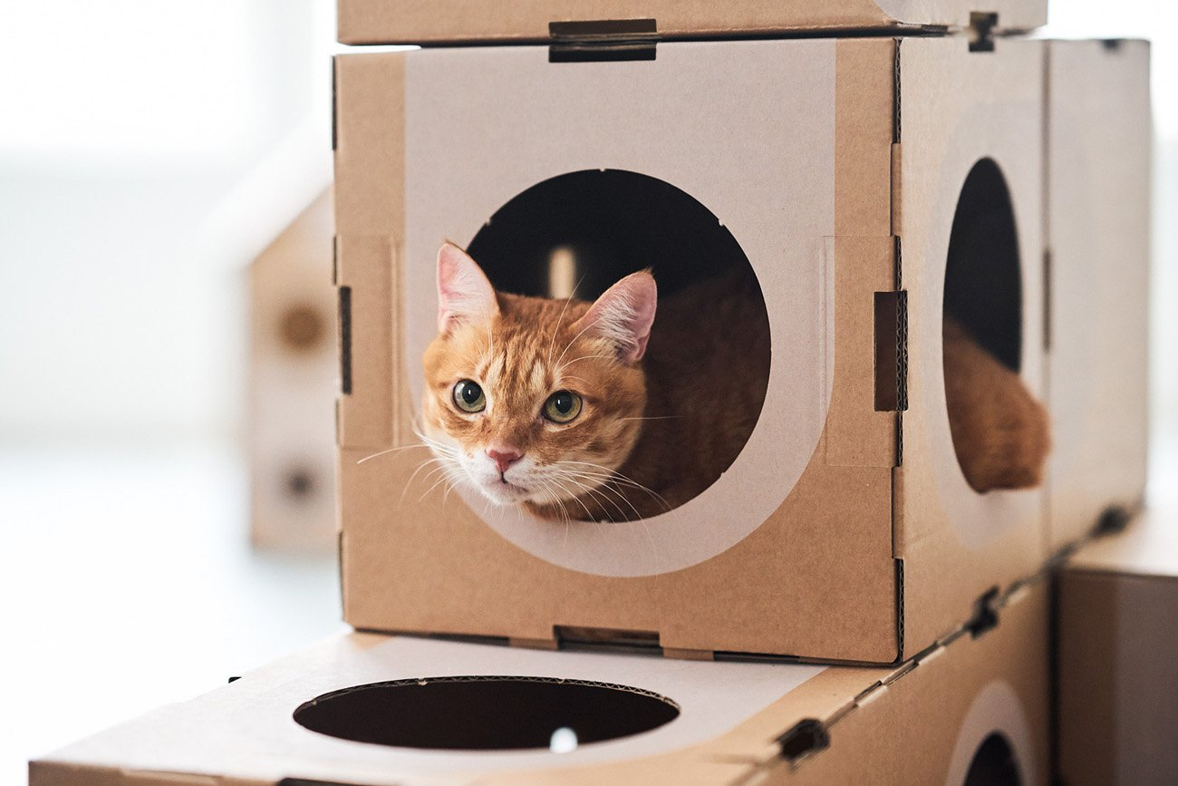 Простой домик из картона для кошки