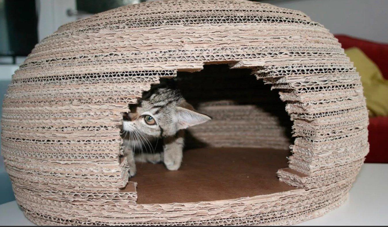 Котенок в домике из гофрокартона