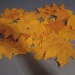 Отрываем черенки от листьев