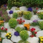 Оформление клумбы низкорослыми цветами и природными камнями