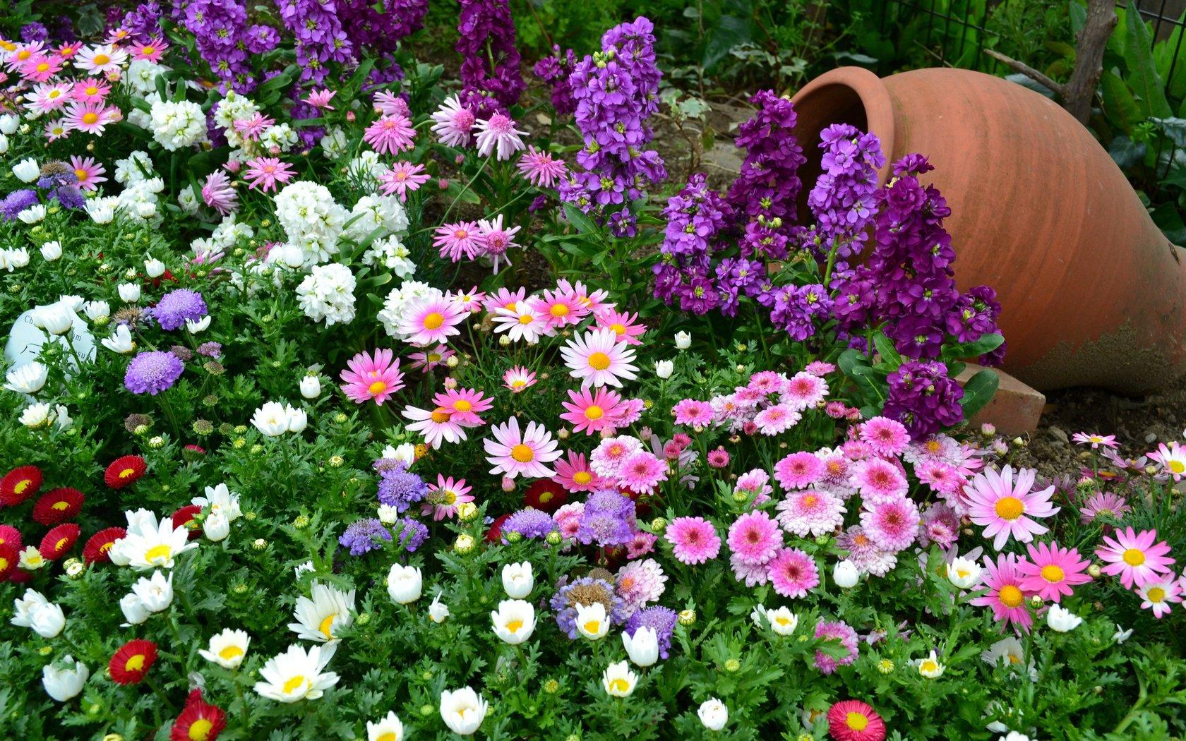 Цветы с поздним цветением