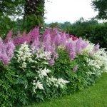 Высокорослые цветы на клумбе