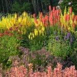 Высокорослые цветы в саду