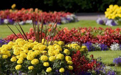 Список многолетних цветов для дачи и сада