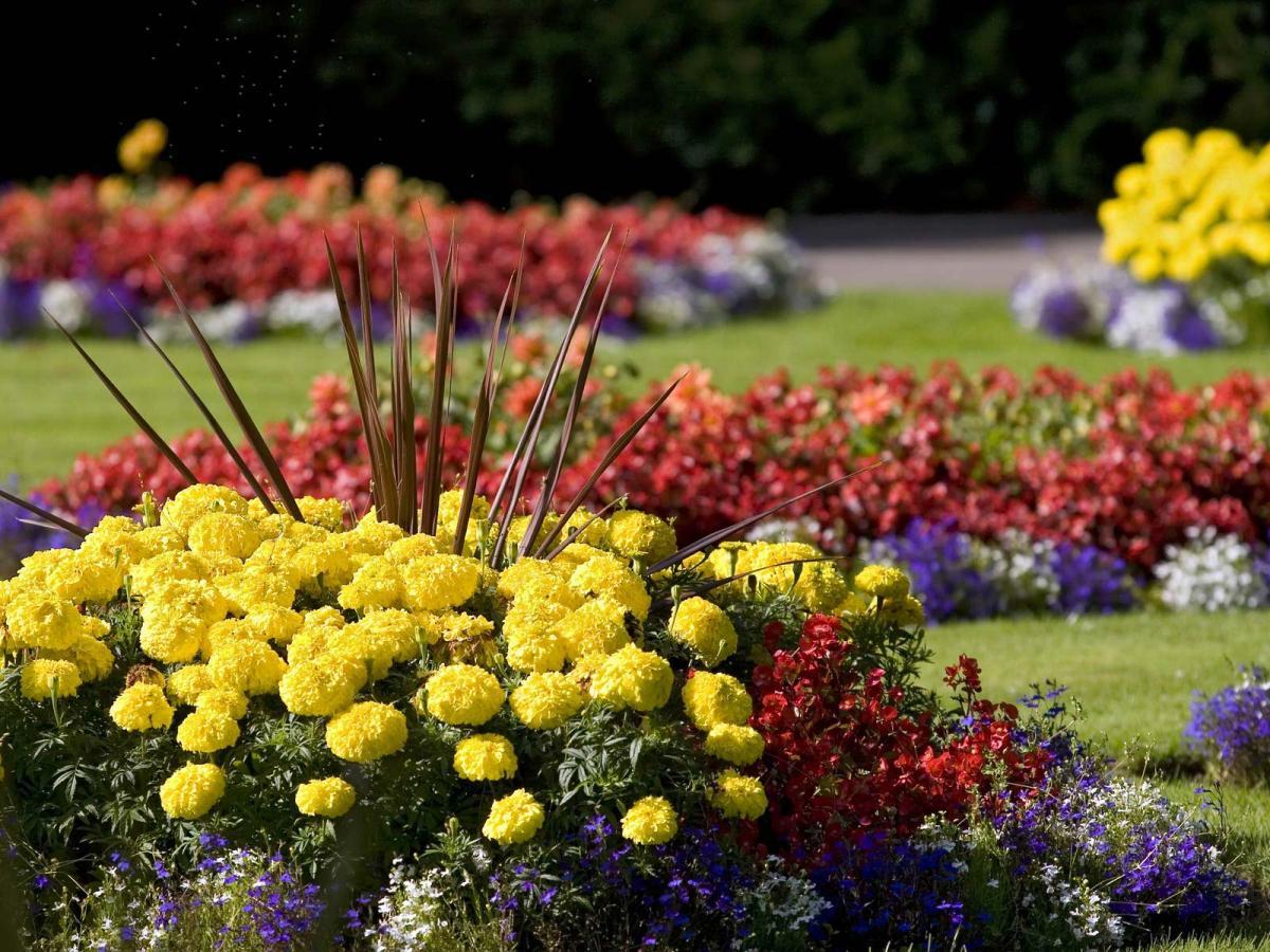 Летние цветы в грунт