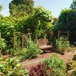 Скамейка в винограднике
